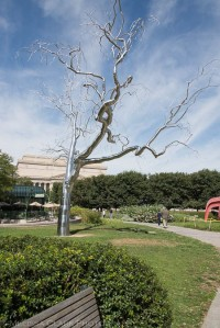 national-sculpture-garden-7-of-9